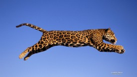 Jumping Jaguar